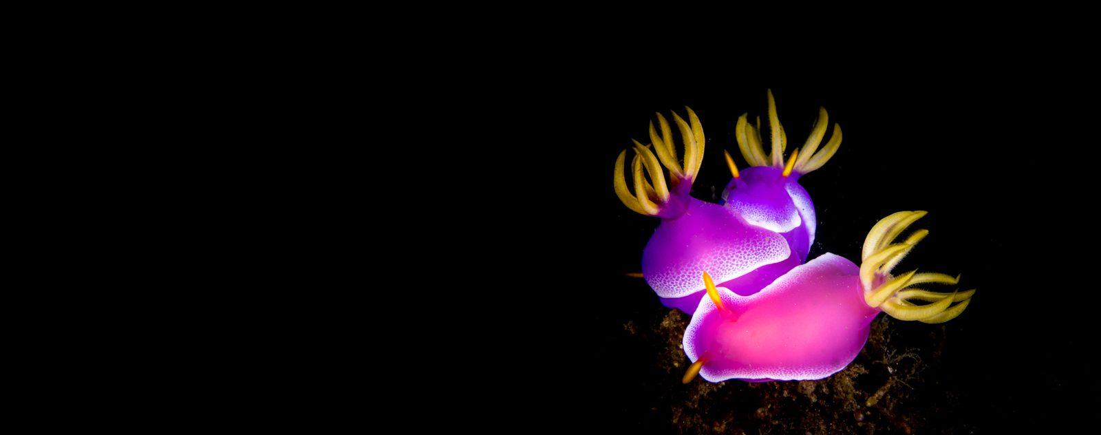 night diving lembeh strait