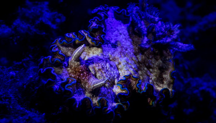 Fluo Diving at Lembeh Resort