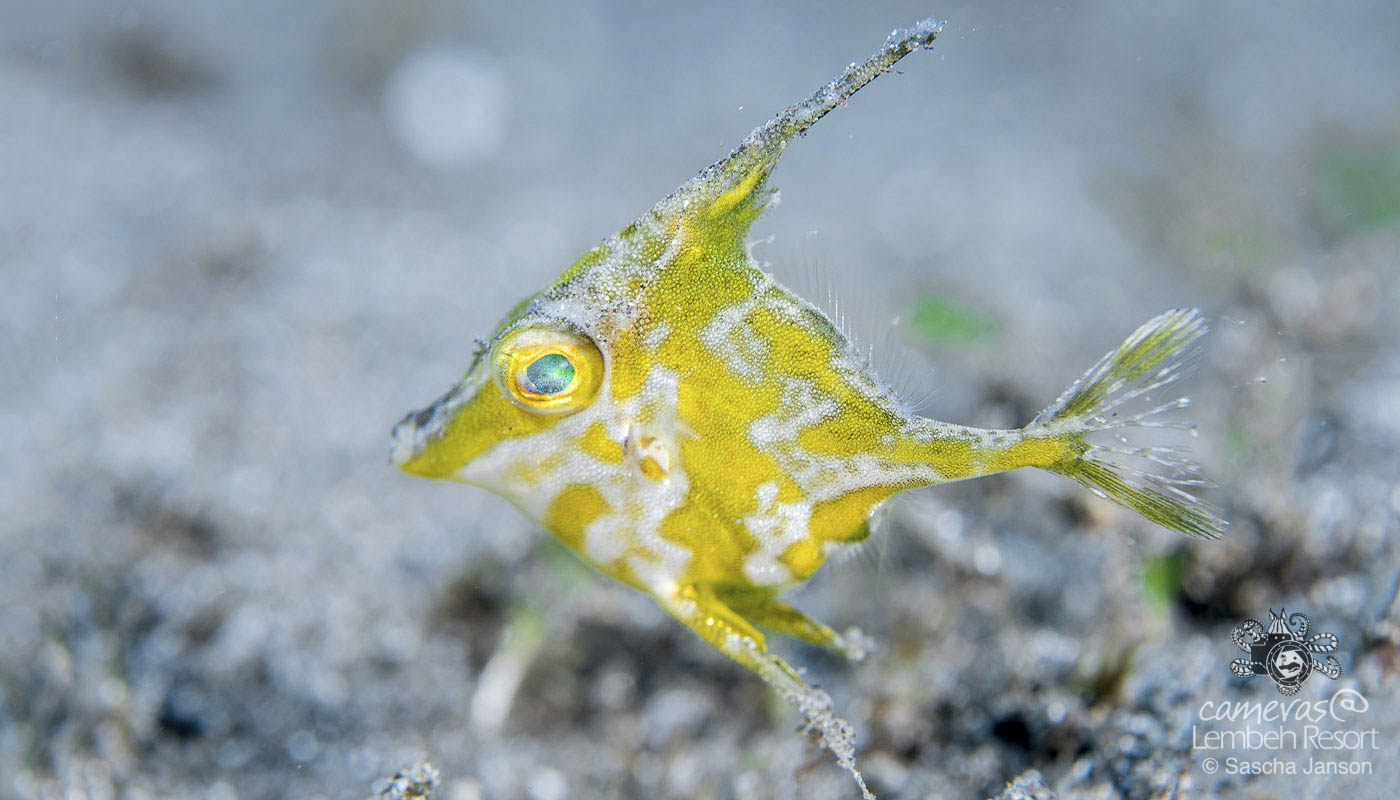 Critters of the Lembeh Strait | October Highlights