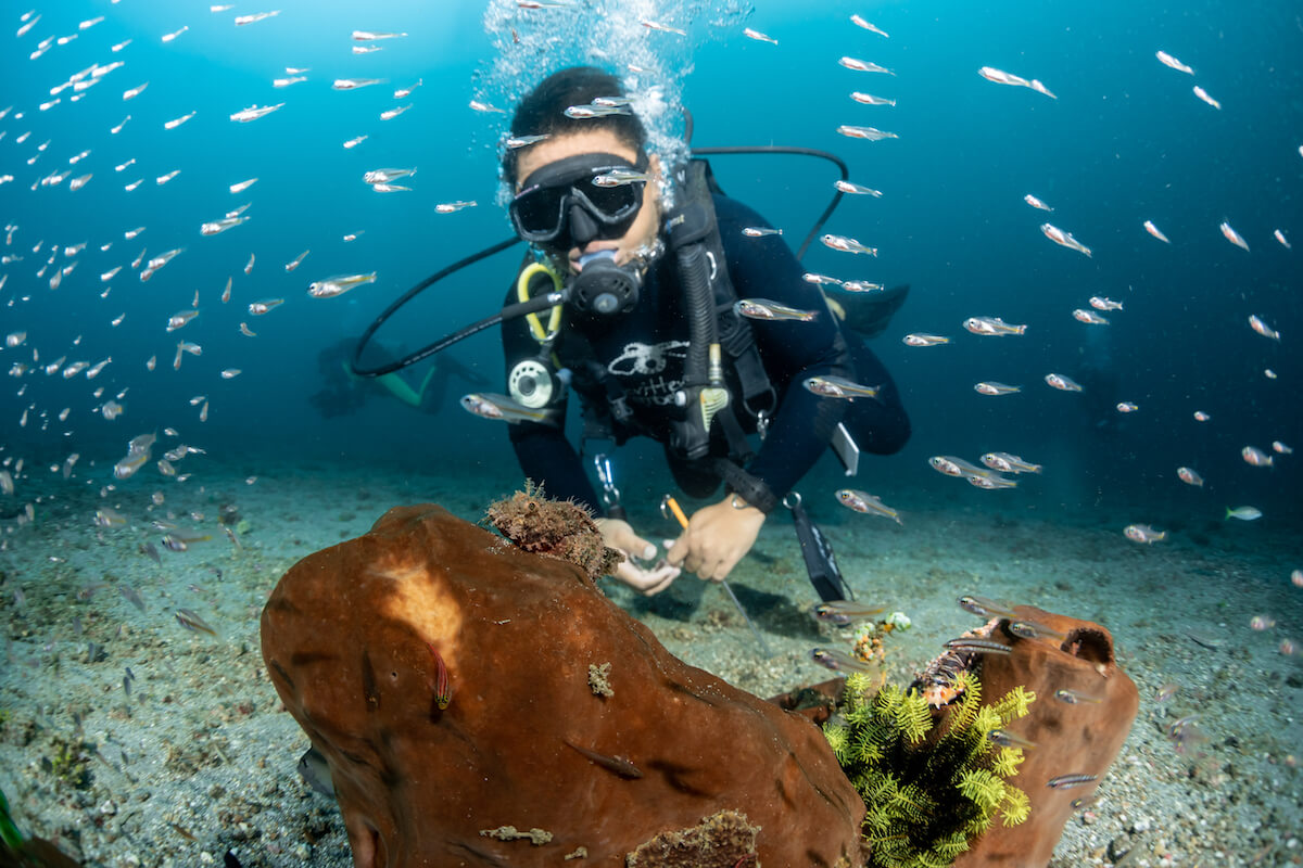 Diving in Lembeh