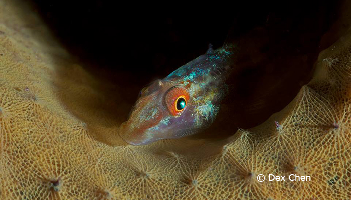 Capturing Critters in Lembeh Workshop 2013: Day 5 & 6