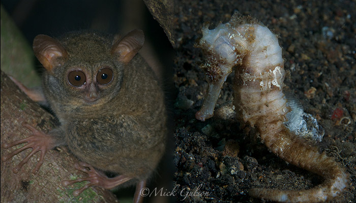 Lembeh Above and Below