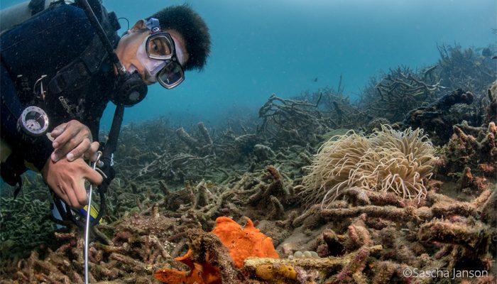 Nudibranch Marine Biologist at Lembeh Resort