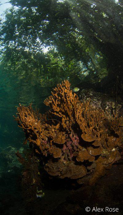 Batu Angus - Lembeh Strait 1