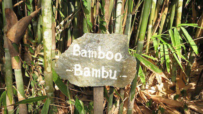 Bamboo Lembeh