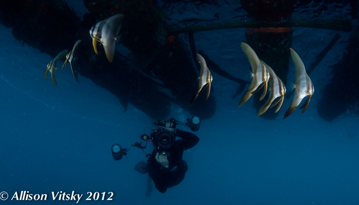 The Lembeh Wide Open!