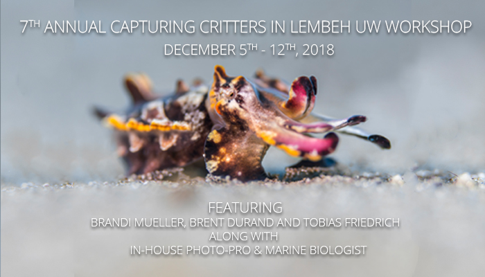 Capturing Critters in Lembeh Workshop 2018
