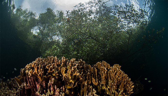 Batu Angus - Mangrove - Lembeh Strait