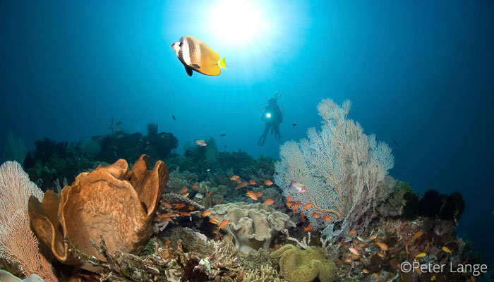 Best Dive Sites in North Sulawesi – Indonesia
