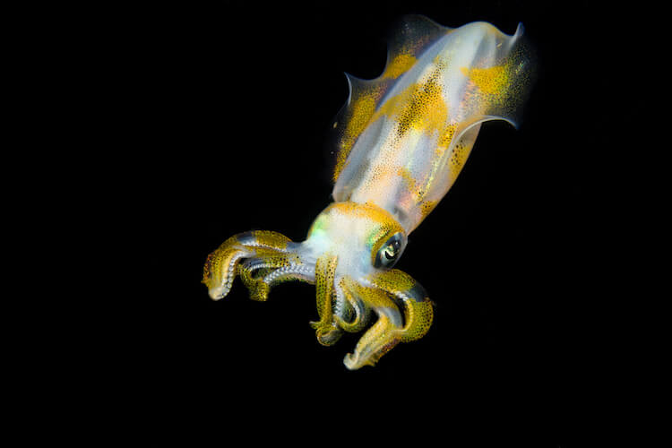 Lembeh underwater photography