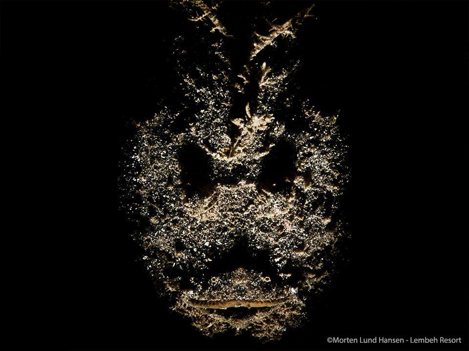 Bump-In-The-Night-Phantom-velvetfish