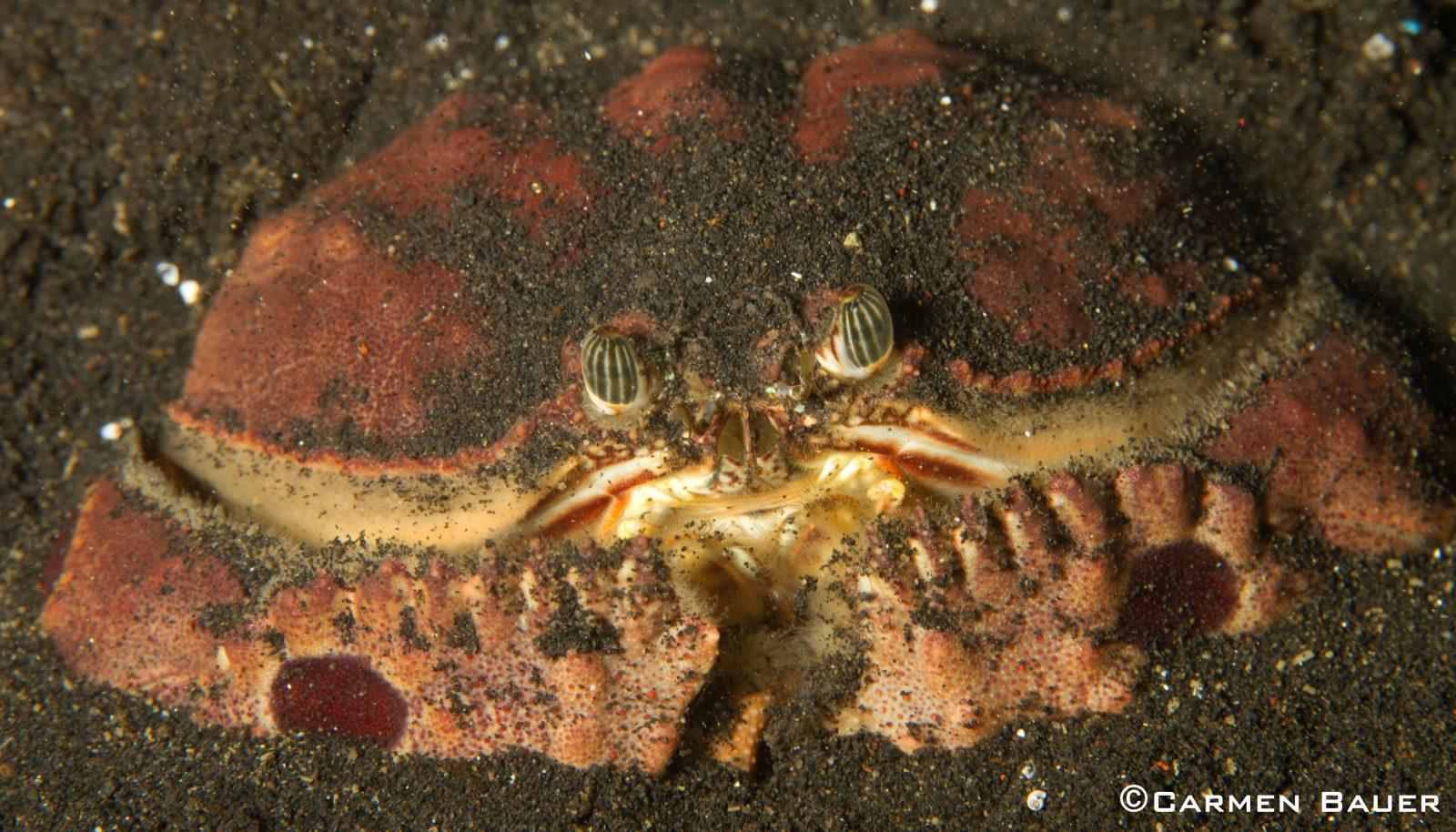 Favorite Critters – Crustacean