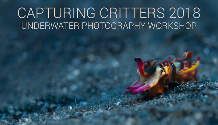 Capturing Critters 2018 Underwater Photography Workshop