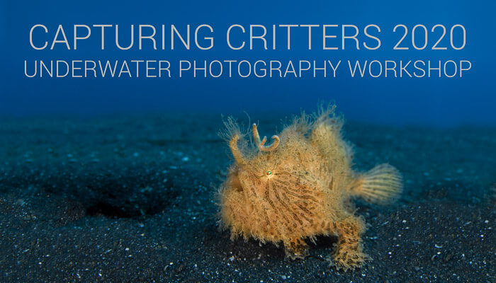 Capturing Critters 2020 Underwater Photography Workshop