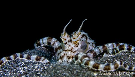 Capturing Critters in Lembeh 2017 - workshop