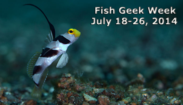 Fish Geek Week with Gerald Allen & Mark Erdmann – July 18 – 26, 2014