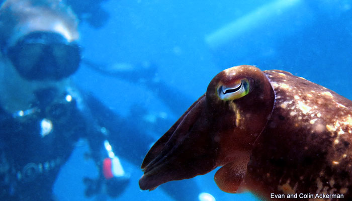 Productive Holiday In Lembeh