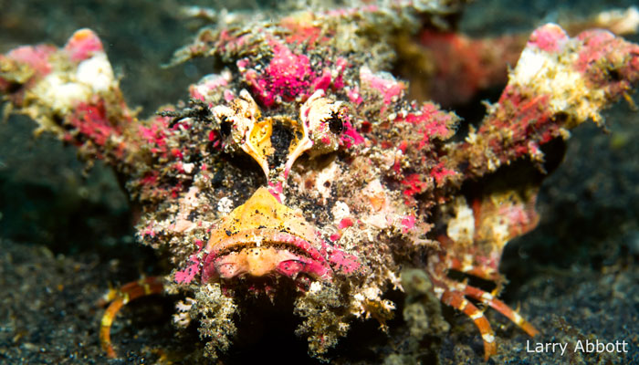 Lembeh Resort is my Favorite Place to Stay and Dive
