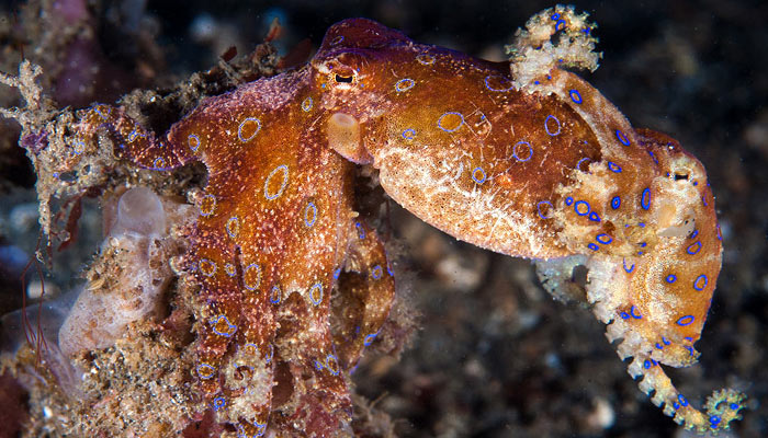 Star of Lembeh – Part I