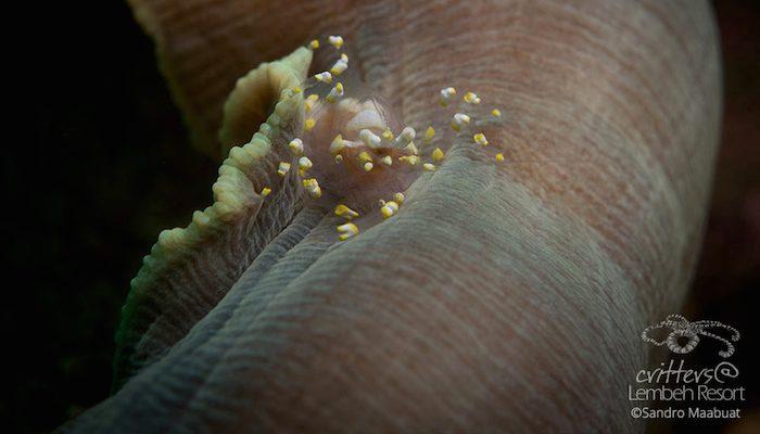 Crustacean Station  – Part II