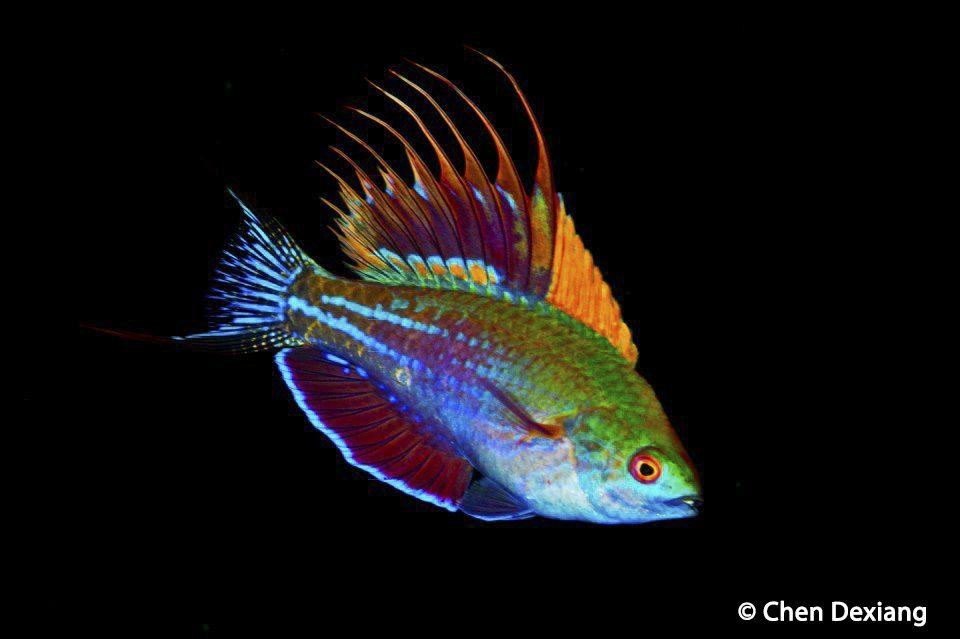 Marine Biologist Information Marine World