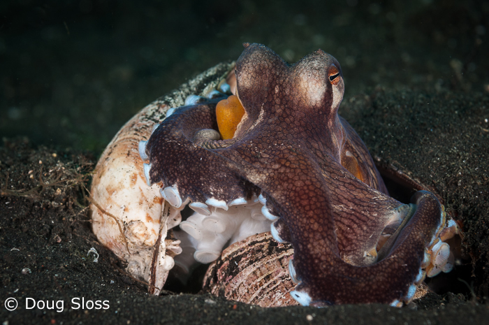 Recap from Day Five of 'Capturing Critters @ Lembeh'
