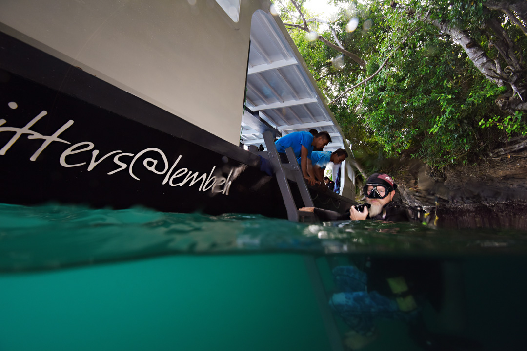 Diving in Lembeh Strait