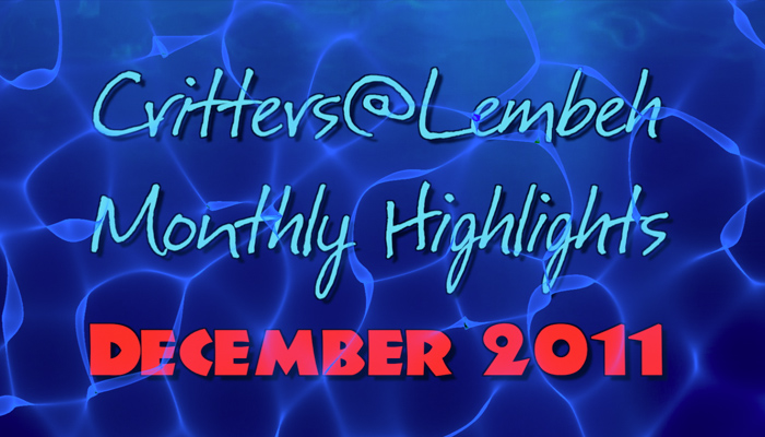 Monthly Highlights Video – December 2011