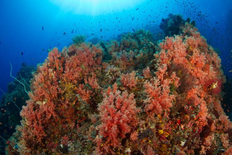 Coral Reef in Lembeh