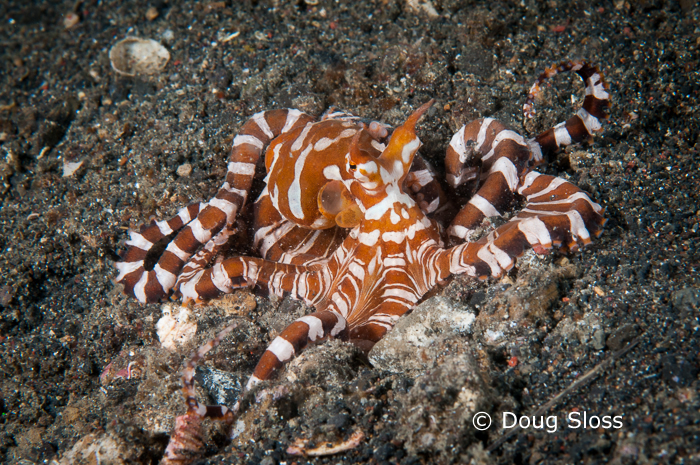 Recap from Day Two of 'Capturing Critters @ Lembeh'
