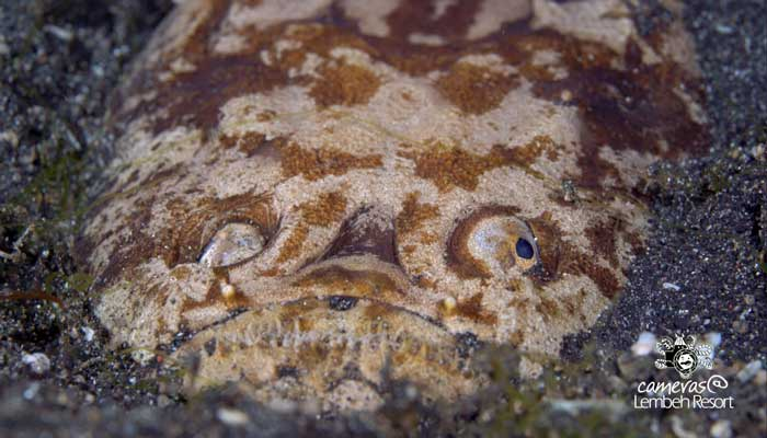 Critters of the Lembeh Strait | Episode 19 – 2015 | The Good, The Bad And The Ugly – Part 1