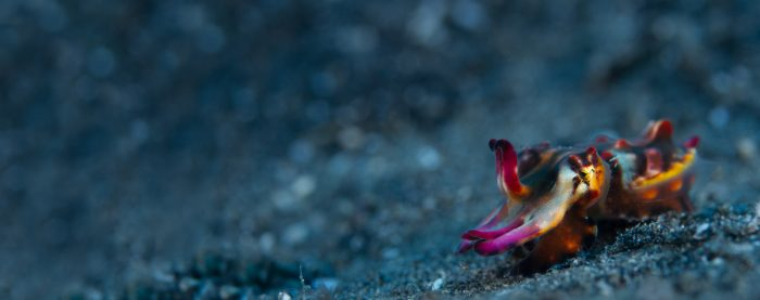 Capturing Critters in Lembeh Underwater Photography Workshop 2018
