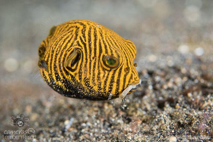 Underwater Photography Juveniles