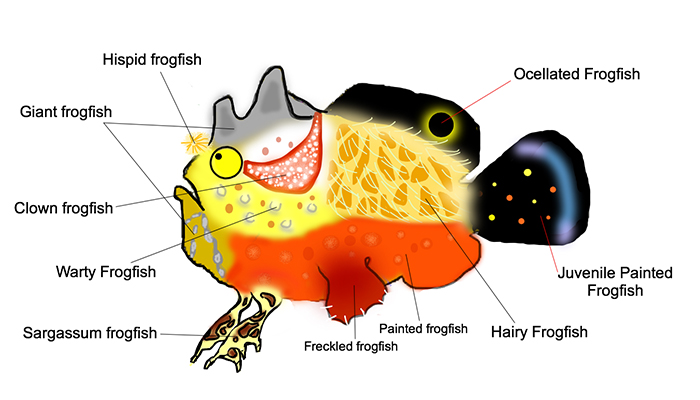 10 Facts about Frogfish