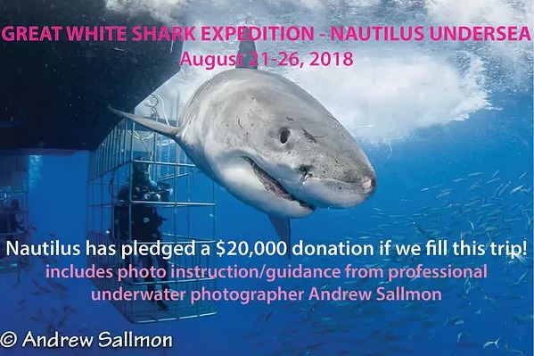 Great White Expedition