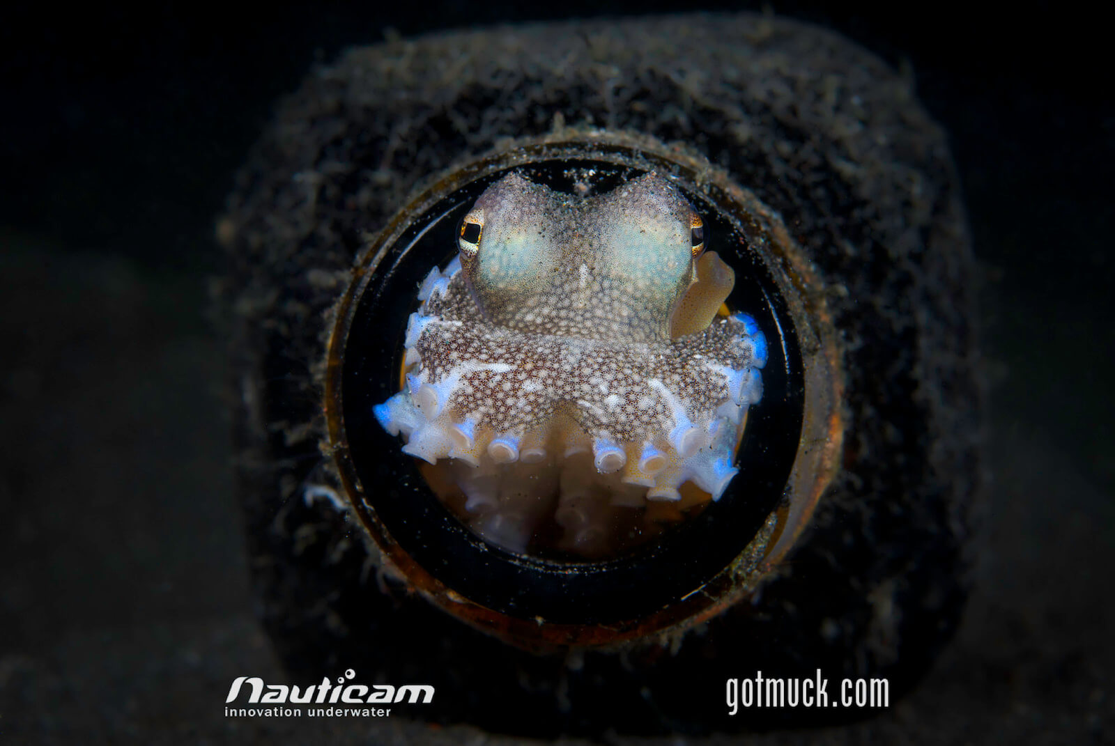 Cephalopods Lembeh
