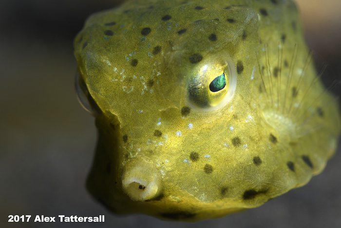 Boxfish-Lembeh-Resort-Workshop