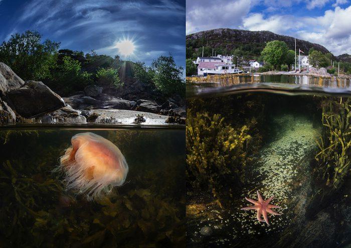 Gulen Underwater Photography