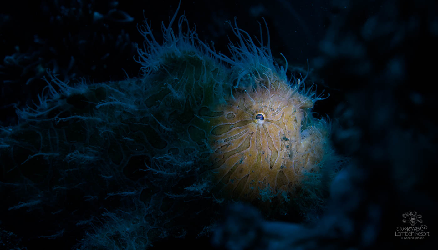Critters of the Lembeh Strait | 2017 April Highlights