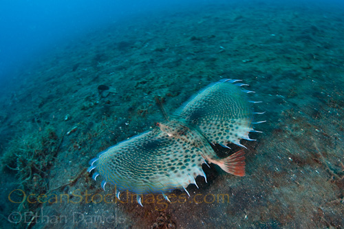 Recap from Day Four of 'Capturing Critters @ Lembeh'