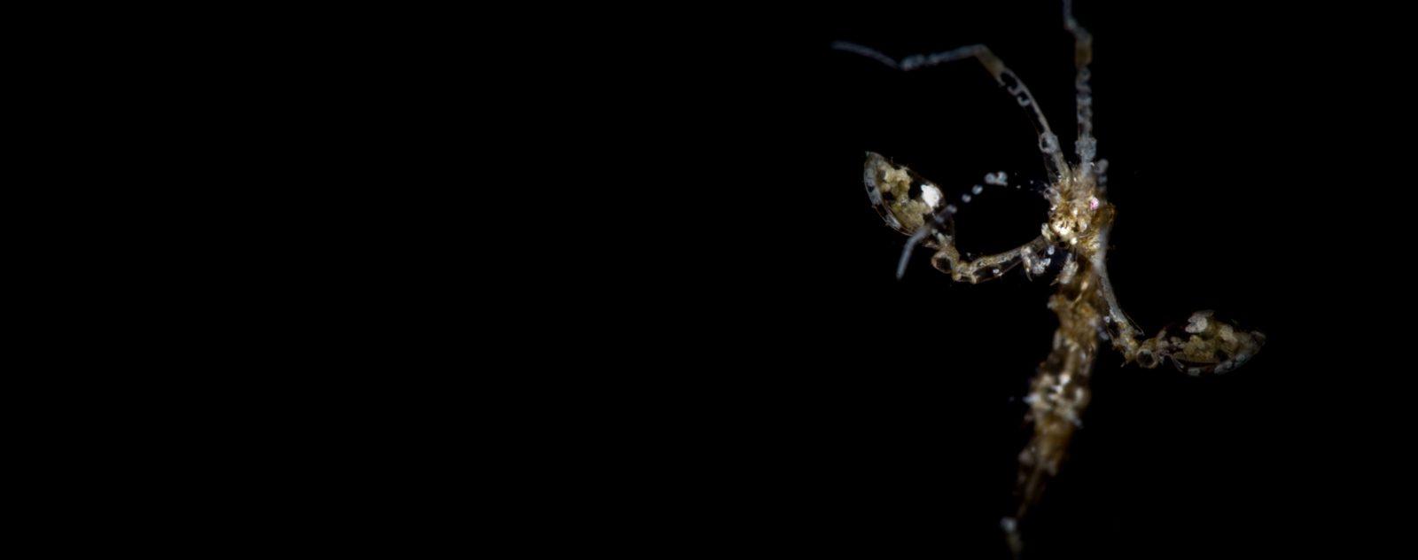 night diving lembeh