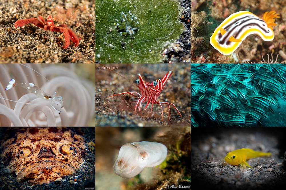 Capturing Critters in Lembeh 2019