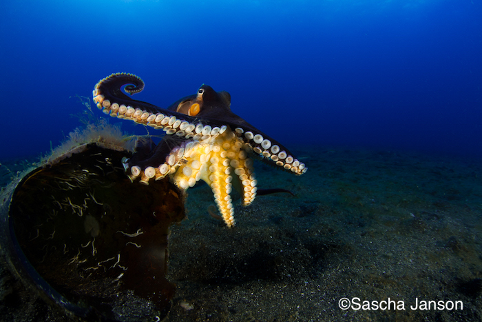 Lembeh Shootout wide angle