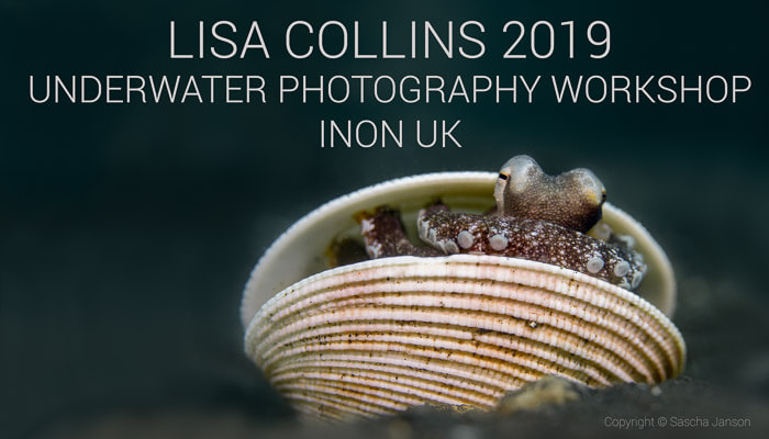 Lisa Collins Underwater Photography Workshop 2019