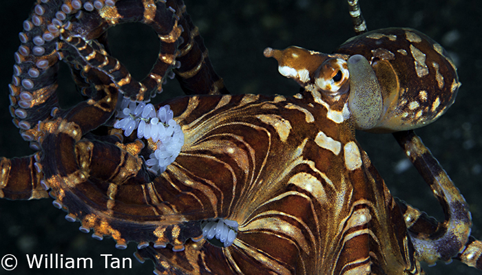 Capturing Critters in Lembeh Workshop 2013: Day 1 & 2