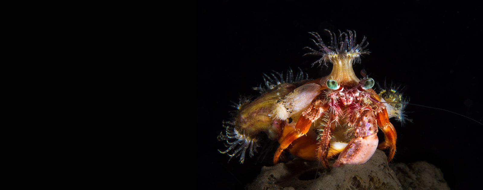 Night Diving in Lembeh Strait