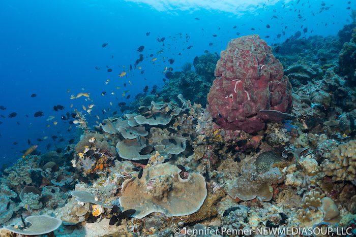 North Lembeh Reefs