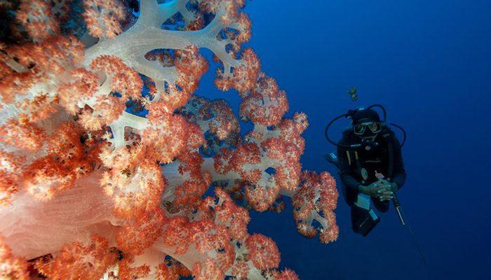 Opo Kecil-Dive Guide-Lembeh strait