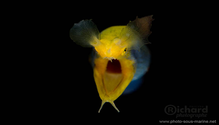 The Dark Side of the Lembeh Strait