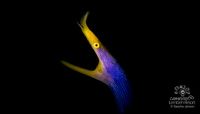 Critters of the Lembeh Strait | Episode 07 –  2016 – June Highlights